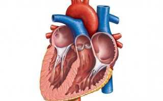 Опухоль сердца — причины, методы диагностирования, лечение