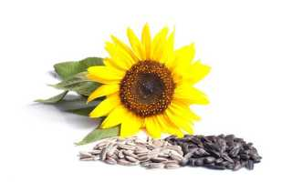 Жаренные семечки подсолнуха при повышенном холестерине – польза и вред