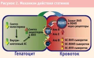 Дуплекор – инструкция, клиническая эффективность и фармакодинамика