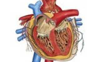Приобретенные пороки сердца – разновидности, их особенности и правила лечения