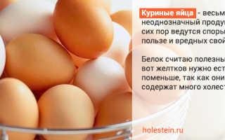 Холестерин в куриных яйцах – какое влияние оказывает на организм человека