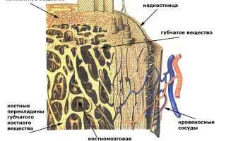 Диффузный остеопороз позвоночника – причины болезни, методы диагностики и лечения