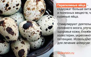Есть ли холестерин в перепелиных яйцах – в каком количестве, опасен ли он?