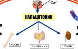 Кальцитонин — функция гормона, нормальные и повышенные показатели
